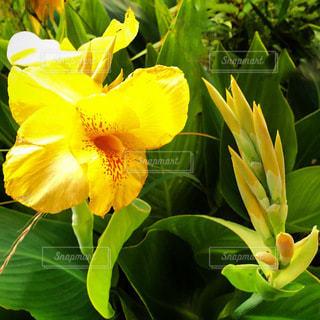 花のクローズアップの写真・画像素材[3333823]