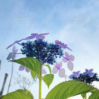 花園のクローズアップの写真・画像素材[3344990]