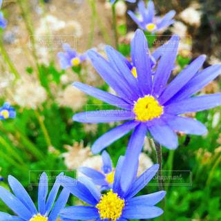 花のクローズアップの写真・画像素材[3354408]