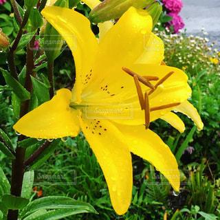 花のクローズアップの写真・画像素材[3386521]
