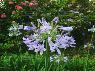 花園のクローズアップの写真・画像素材[3386522]