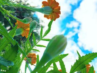 緑の植物のクローズアップの写真・画像素材[3441213]