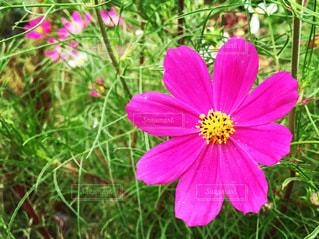 花のクローズアップの写真・画像素材[3458386]