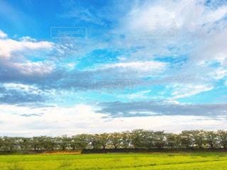青空と田んぼの写真・画像素材[3640706]