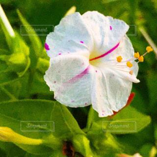 花のクローズアップの写真・画像素材[3740084]