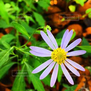 花のクローズアップの写真・画像素材[3792185]