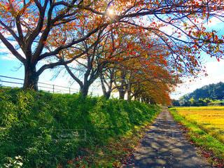 公園の木の写真・画像素材[3814503]