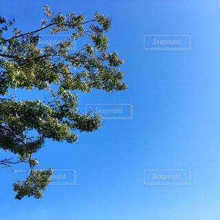 青空と木の写真・画像素材[3924668]