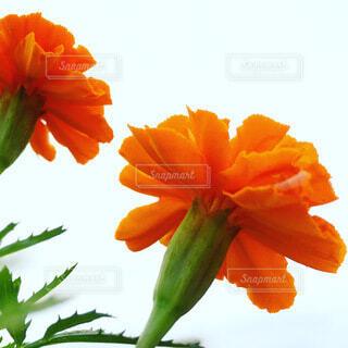 下から見上げた花の写真・画像素材[3957025]