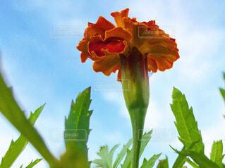 下から見上げた花の写真・画像素材[4026140]