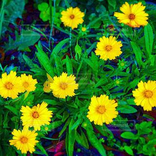 黄色い草花の写真・画像素材[4040386]