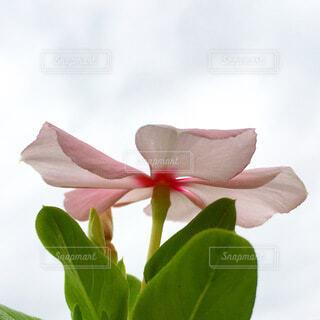 下から見上げた花の写真・画像素材[4081597]