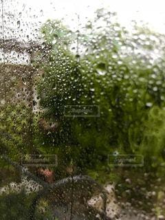 雨の写真・画像素材[1446895]