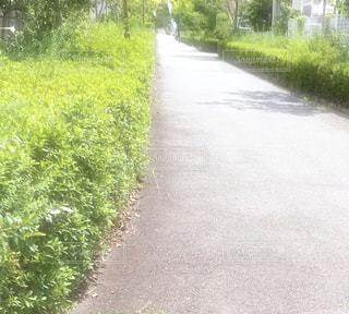 道路の脇に木がある道の写真・画像素材[3011483]