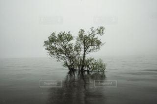 湖にたたずむ一本の木の写真・画像素材[1428083]