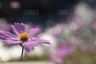 近くの花のアップの写真・画像素材[1432843]