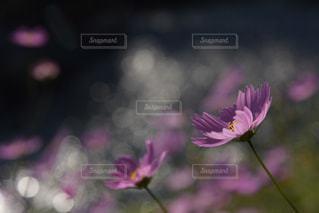近くの花のアップの写真・画像素材[1432844]