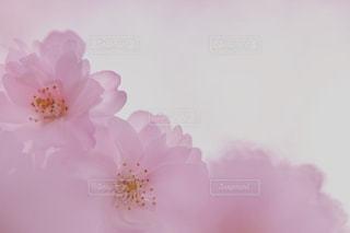花の写真・画像素材[1432878]