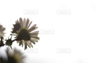 近くの花のアップの写真・画像素材[1432879]