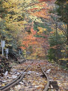 秋色の線路の写真・画像素材[1579723]