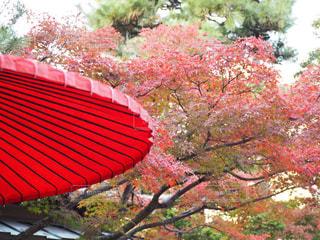 紅×紅の写真・画像素材[1640865]