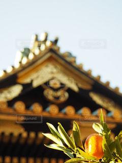 徳川家康さんのみかんの木との写真・画像素材[1699763]