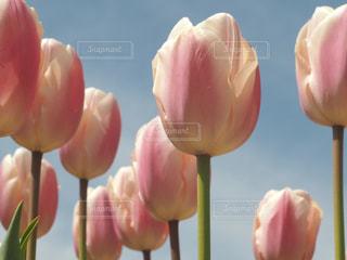 穏やかな春の写真・画像素材[2063632]