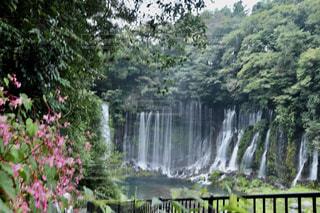 白糸の滝の写真・画像素材[2440304]
