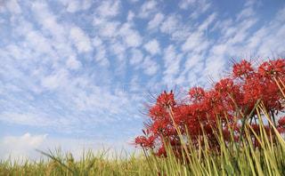 うろこ雲の写真・画像素材[2491665]