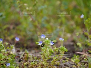 花園のクローズアップの写真・画像素材[2467515]