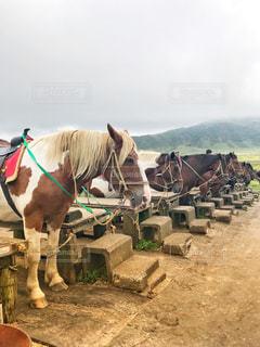 乗馬体験の写真・画像素材[1458219]
