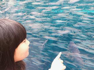 水族館の写真・画像素材[1430027]
