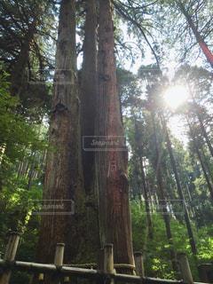御岩神社の写真・画像素材[1430029]