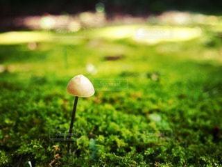 自然の写真・画像素材[54695]