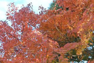 秋の写真・画像素材[1760159]