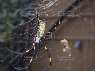女郎蜘蛛の写真・画像素材[2634948]