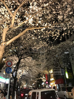 夜桜の写真・画像素材[1483516]