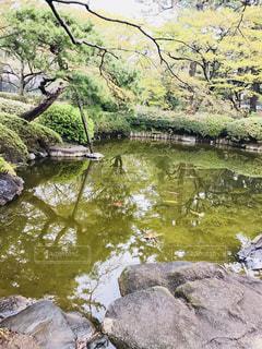 日本庭園の池の写真・画像素材[1430793]