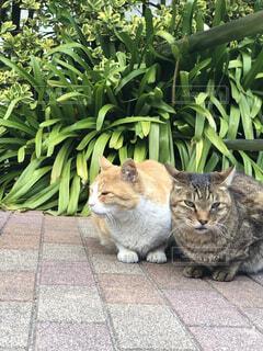二匹の野良猫の写真・画像素材[4048666]