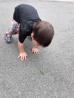 虫に戦いを挑む息子の写真・画像素材[1431005]