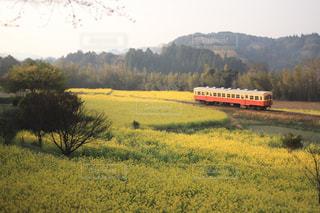 菜の花畑を走る電車の写真・画像素材[1720816]