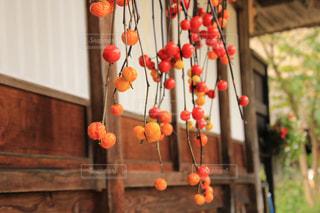 軒先の花茄子の実の写真・画像素材[1789742]