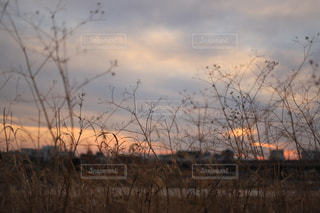 近くに乾いた草のフィールドのの写真・画像素材[1823650]