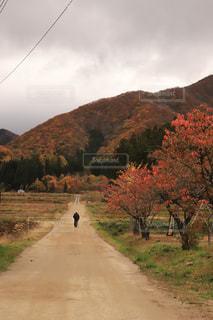 色づく小道を歩く人の写真・画像素材[2420100]