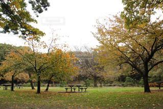 紅葉の木とベンチの写真・画像素材[2790990]