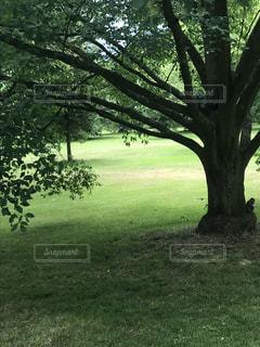 公園の木とリスの写真・画像素材[1740789]