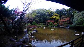 近くに池の写真・画像素材[1627579]