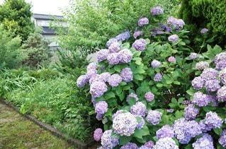 花の写真・画像素材[47349]