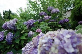 花の写真・画像素材[47369]