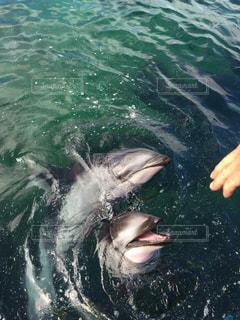水面下を泳ぐ魚たちの写真・画像素材[1433175]